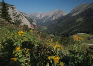 Karwendeltal Blumen